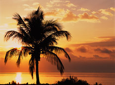 Coconut Palms At Sunrise, Sanibel Island Causeway, Florida Wallpaper Mural