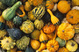 Collage Of Gourds Wall Mural