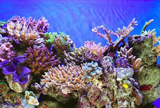Colorful Coral Wallpaper Mural