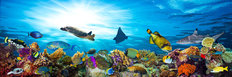 Colorful Coral Reef Wall Mural
