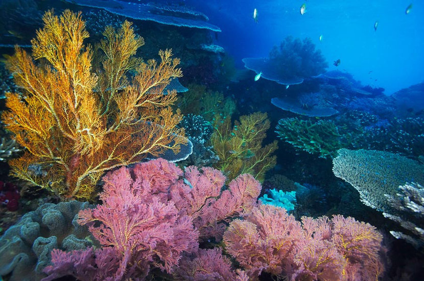 Colorful Coral Reefscape, Indonesia Wall Mural