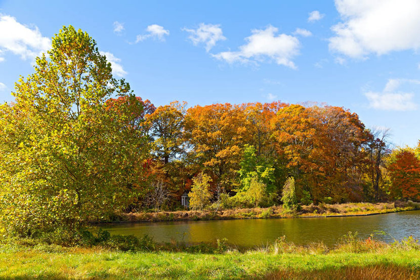 Colorful Fall Foliage Of Deciduous Trees  Wall Mural