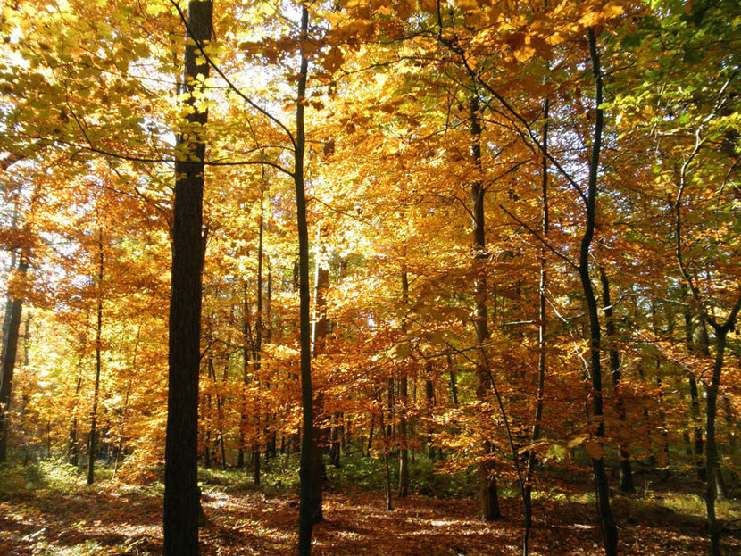 Colorful Forest In Fall With Yellow Leaves Wall Mural