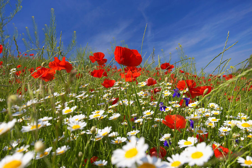 Colorful meadow with flowers and a blue sky