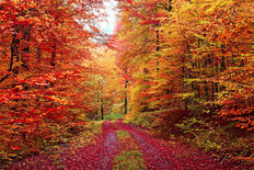 Colorful Autumn Forest Road Wallpaper Mural