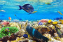 Coral And Fish In The Red Sea Wallpaper Mural