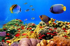 Coral Corral Mural Wallpaper