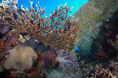 Coral Reefscape, Papua New Guinea 2 Wall Mural