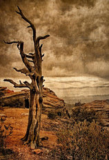 Crags and Crooks II - Sepia Wallpaper Mural
