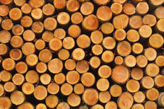 Cut Logs Mural Wallpaper