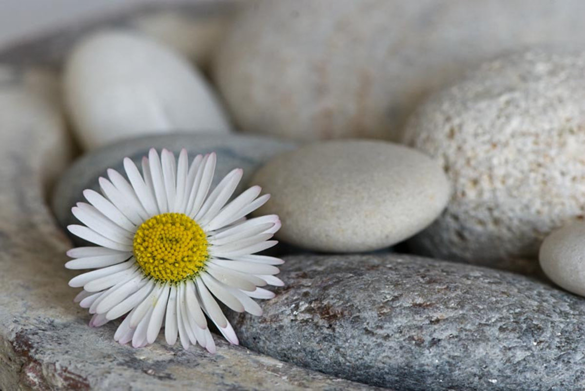 Daisy Pebble Mural Wallpaper