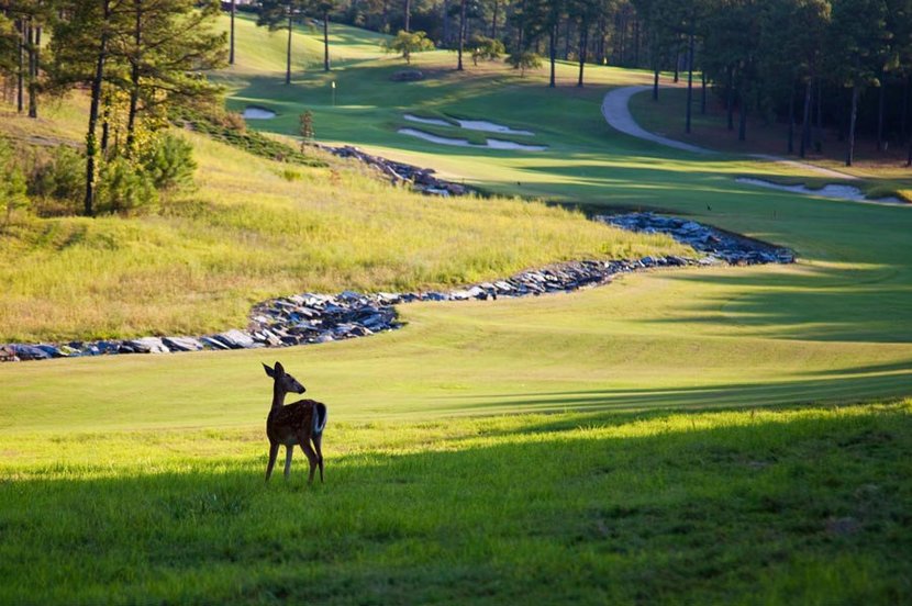 Golf Course Deer Wallpaper Mural