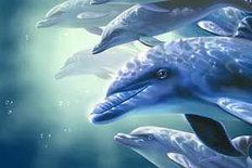 Dolphin Play Wallpaper Mural