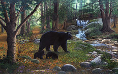 Early Morning Black Bears Wallpaper Mural