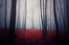 Eerie Autumn Forest Wall Mural
