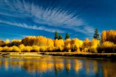 Fall Colored Aspen Trees And Deschutes River Wall Mural