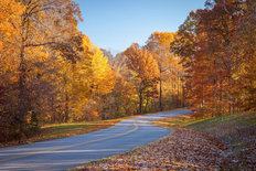 Fall Road Wall Mural