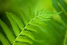 Fern Curve Wallpaper Mural