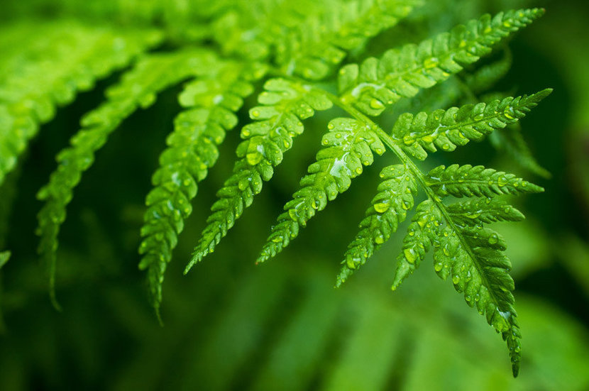 Fern Leaf With Water Drops Mural Wallpaper