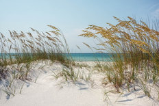 Florida Sand Dunes And Sea Oats At The Beach Wall Mural