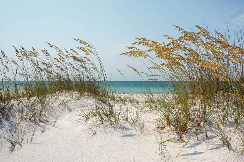 Beach picture of sand dunes in florida with sea oats blowing in the wind and the ocean in the background.