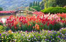 Colorful Flower Garden Mural Wallpaper
