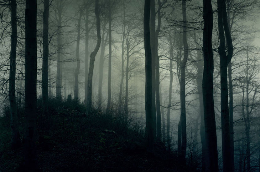 dark forest filled with many trees, their branches outstretched, is shrouded by a thick fog