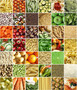 Food Collage Wall Mural