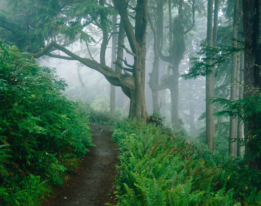 Forest Trail, Cape Lookout State Park, OR Wallpaper Mural