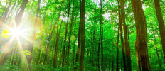Green Sunlit Forest Wallpaper Mural