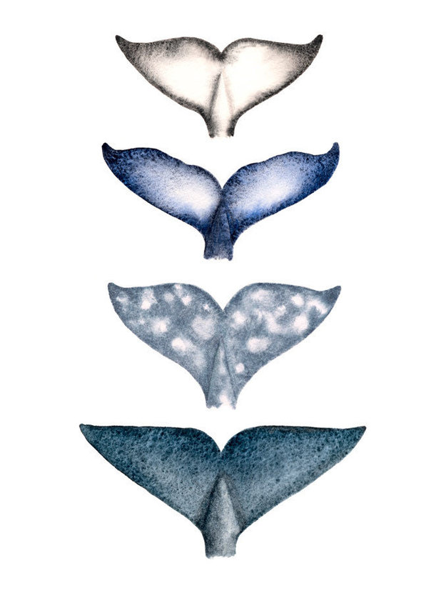 Four Whale Tails Wall Mural