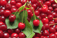 Fresh Cherries Wall Mural