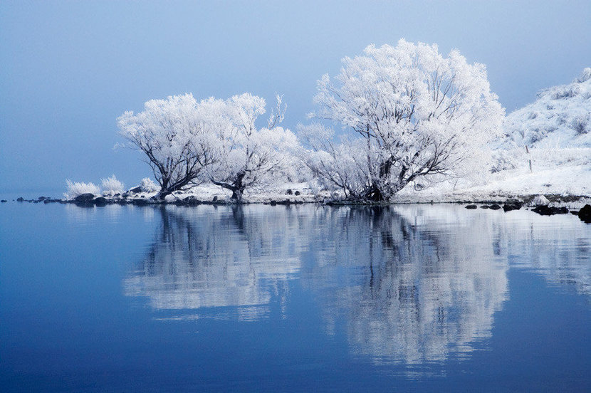 Frosted Willow Tree Reflection Wall Mural