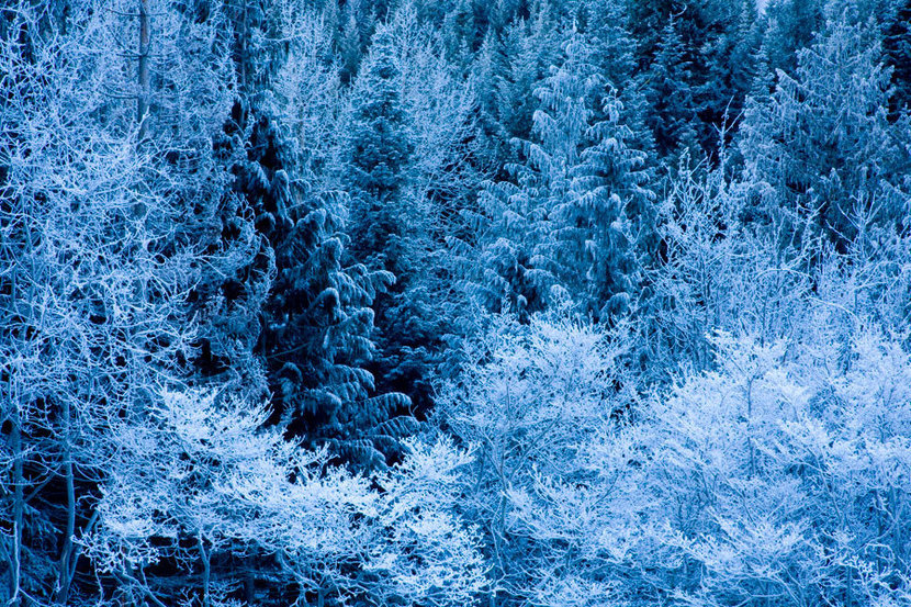 Frosty Trees, Wenatchee National Forest Mural Wallpaper