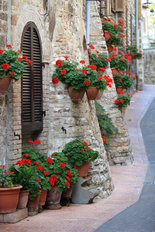 Geranium Flowers in Italian Streets  Wallpaper Mural