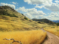 Glorious Grasslands Wall Mural