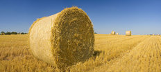 Golden Hay Bales On A Clear Summer Day Wallpaper Mural