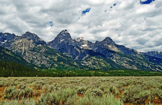 Grand Tetons (Hale) Wall Mural