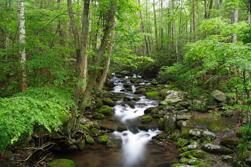 Great Smoky Mountains National Park Wall Mural