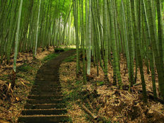 Green Bamboo Path Wallpaper Mural