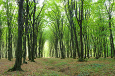 Green Forest In Spring Mural Wallpaper