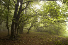 Green Forest With Fog Wallpaper Mural