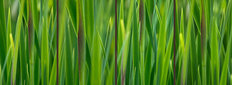 Green Grass Gradient Wallpaper Mural