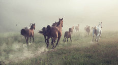 A Group of Horses Running In A Meadow Mural Wallpaper