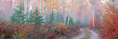 Halfmoon Lake Road, Upper Peninsula, Michigan Wallpaper Mural