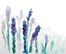 Hand Painted Watercolor Lavender Wallpaper Mural