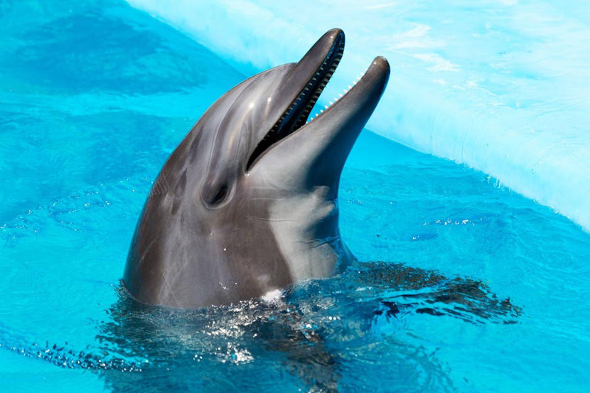 dolphin poking out of the water and smiling