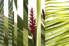 Hawaii Grass 2 Wall Mural