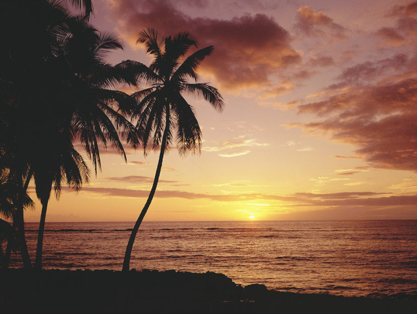Picture of a beautiful Hawaiian sunset with coconut palm trees overlooking the ocean