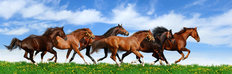 Herd Galloping Against A Blue Sky Mural Wallpaper